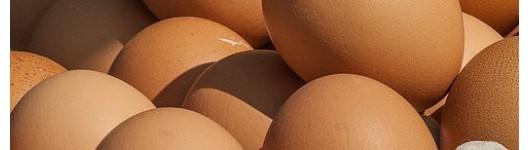 Produkce vajec