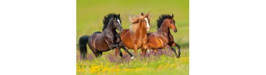 Lisovaný krmný doplněk pro koně